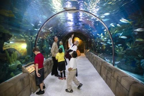 New Orleans Audubon Aquarium Of The Americas Coupons